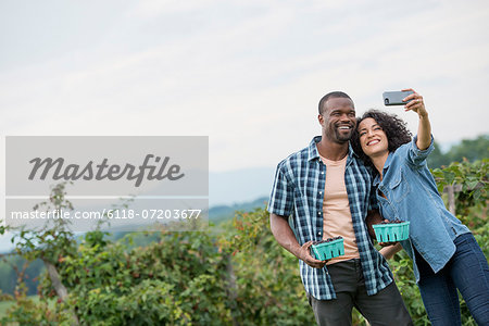 Picking blackberry fruits on an organic farm. A couple taking a selfy with a smart phone, and fruit picking. Stock Photo - Premium Royalty-Free, Image code: 6118-07203677