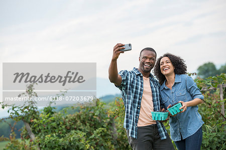 Picking blackberry fruits on an organic farm. A couple taking a selfy with a smart phone, and fruit picking. Stock Photo - Premium Royalty-Free, Image code: 6118-07203679
