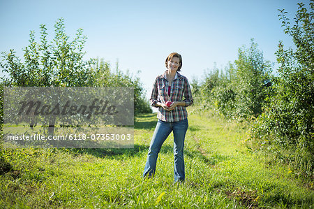 A woman in a plaid shirt picking apples in the orchard at an organic fruit farm. Stock Photo - Premium Royalty-Free, Image code: 6118-07353003