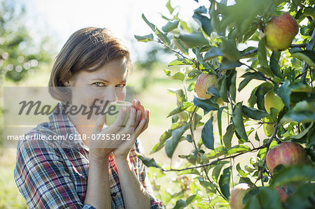A woman in a plaid shirt smelling the freshly picked ripe apple in her hand at an organic fruit farm. Stock Photo - Premium Royalty-Free, Image code: 6118-07353022