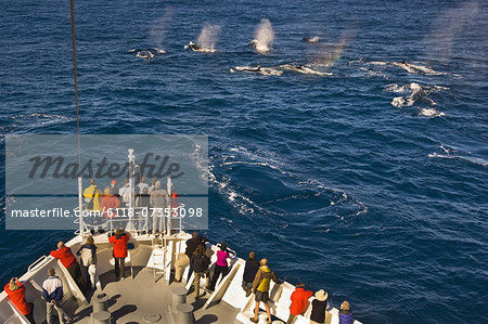 Tourists watching fin whales, Balaenoptera physalus, from a cruise ship, off the coast of South Georgia Island in the Falkland Islands. Stock Photo - Premium Royalty-Free, Image code: 6118-07353098