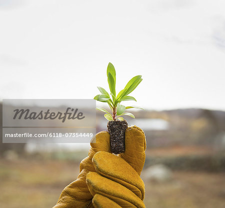 An Organic Farm in Winter in Cold Spring, New York State.  A gloved hand holding a small new seedling with two sets of green leaves. Stock Photo - Premium Royalty-Free, Image code: 6118-07354449