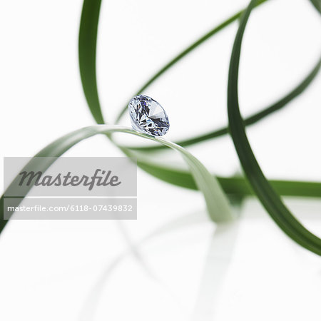 Thin strap green leaves or leaf strands with a small glass bead or gem, with cut facets reflecting the light. Stock Photo - Premium Royalty-Free, Image code: 6118-07439832
