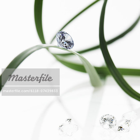 Thin strap green leaves or leaf strands with a small glass bead or gem, with cut facets reflecting the light. Stock Photo - Premium Royalty-Free, Image code: 6118-07439833