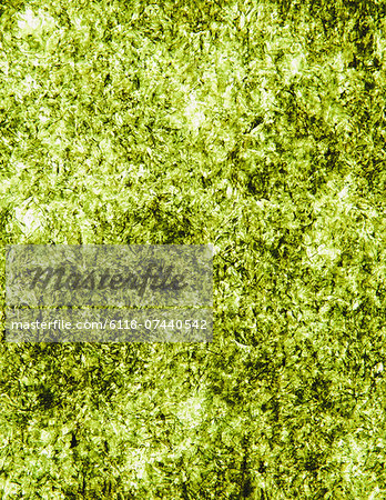 Sheet of organic sushi nori seaweed Stock Photo - Premium Royalty-Free, Image code: 6118-07440542