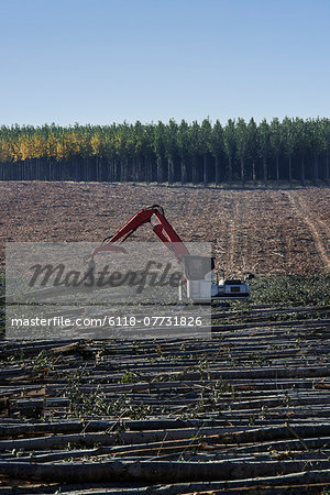 A mechanised grabber sorting felled poplar tree trunks on a plantation. Stock Photo - Premium Royalty-Free, Image code: 6118-07731826