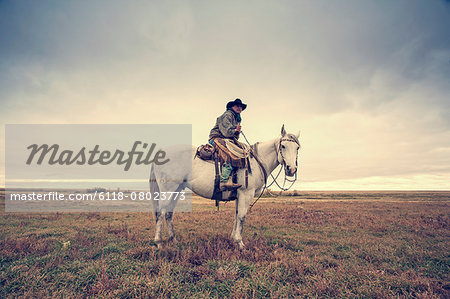 A working cowboy seated on a grey horse. Stock Photo - Premium Royalty-Free, Image code: 6118-08023773