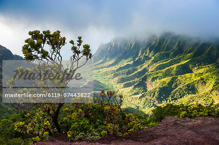 Kalalau lookout over the Napali coast from the Kokee State Park, Kauai, Hawaii, United States of America, Pacific Stock Photo - Premium Royalty-Free, Image code: 6119-07443822