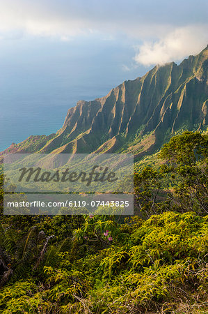 Kalalau lookout over the Napali coast from the Kokee State Park, Kauai, Hawaii, United States of America, Pacific Stock Photo - Premium Royalty-Free, Image code: 6119-07443825