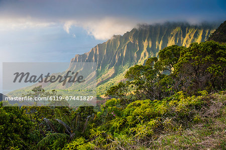 Kalalau lookout over the Napali coast from the Kokee State Park, Kauai, Hawaii, United States of America, Pacific Stock Photo - Premium Royalty-Free, Image code: 6119-07443827