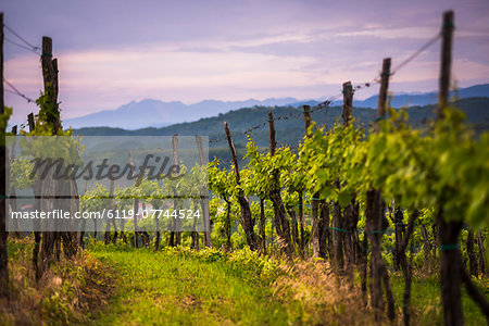 Vineyards and mountains near Smartno in the Goriska Brda wine region of Slovenia, Europe Stock Photo - Premium Royalty-Free, Image code: 6119-07744524