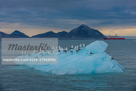 Kittiwakes sitting on a huge piece of glacier ice with an expedition boat in the background, Hornsund, Svalbard, Arctic, Norway, Scandinavia, Europe Stock Photo - Premium Royalty-Free, Image code: 6119-07968981