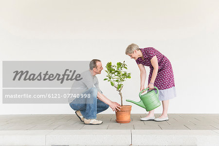Mature couple caring for little tree, smiling Stock Photo - Premium Royalty-Free, Image code: 6121-07740998
