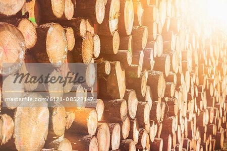 Close-up of wooden logs, Bavaria, Germany Stock Photo - Premium Royalty-Free, Image code: 6121-08522147