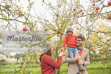 Son on father's shoulder giving apples to his mother, Bavaria, Germany Stock Photo - Premium Royalty-Free, Image code: 6121-08522240
