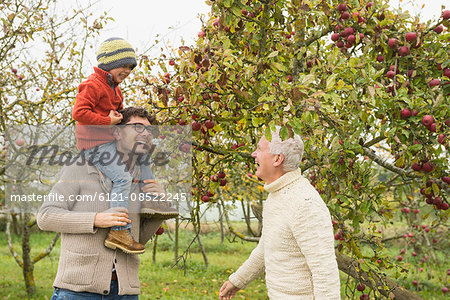 Father, son and grandfather picking apples from apple tree in an apple orchard, Bavaria, Germany Stock Photo - Premium Royalty-Free, Image code: 6121-08522245