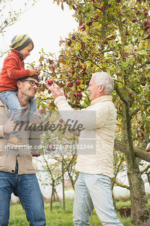 Father, son and grandfather picking apples from apple tree in an apple orchard, Bavaria, Germany Stock Photo - Premium Royalty-Free, Image code: 6121-08522246
