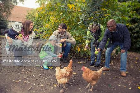 Family and friends feeding apples to chickens in farm, Bavaria, Germany Stock Photo - Premium Royalty-Free, Image code: 6121-08522261