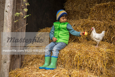 Little boy sitting on straw in the stable and feeding apple to chicken bird, Bavaria, Germany Stock Photo - Premium Royalty-Free, Image code: 6121-08522269