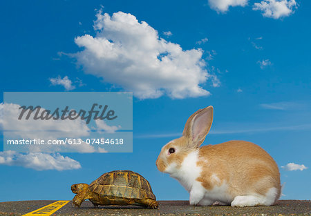 Tortoise and Hare, Finish Line Stock Photo - Premium Royalty-Free, Image code: 613-07454618