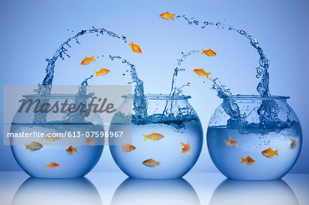 Goldfish jumping from three different bowls Stock Photo - Premium Royalty-Free, Image code: 613-07596967