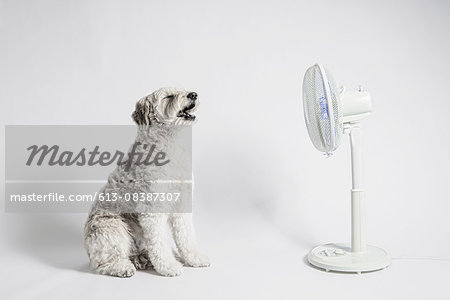 Bianca loves  the fan. Stock Photo - Premium Royalty-Free, Image code: 613-08387307