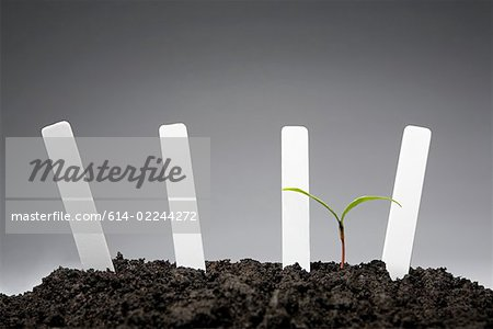 Sapling with blank labels Stock Photo - Premium Royalty-Free, Image code: 614-02244272