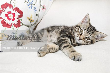 Kitten lying down Stock Photo - Premium Royalty-Free, Image code: 614-03241159