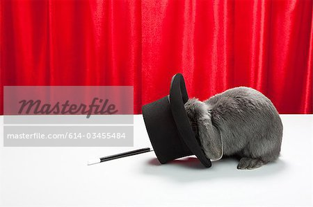 Rabbit with top hat and magic wand Stock Photo - Premium Royalty-Free, Image code: 614-03455484