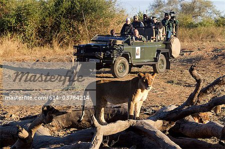 Tourists on safari view wildlife Stock Photo - Premium Royalty-Free, Image code: 614-03784214