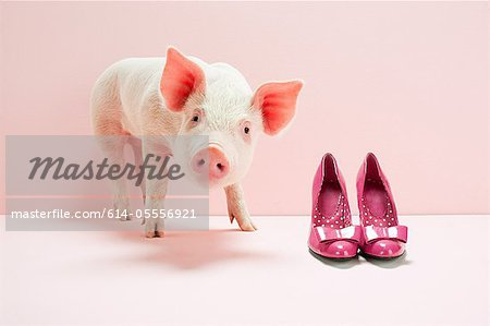 Piglet next to shoes in pink studio Stock Photo - Premium Royalty-Free, Image code: 614-05556921