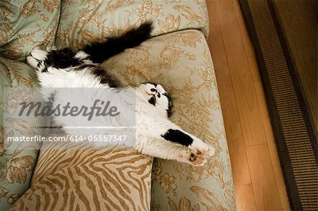 Cat stretching on a sofa Stock Photo - Premium Royalty-Free, Image code: 614-05557347