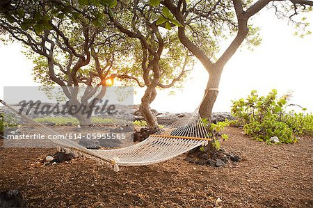Hammock by the ocean on the Big Island of Hawaii Stock Photo - Premium Royalty-Free, Image code: 614-05955565