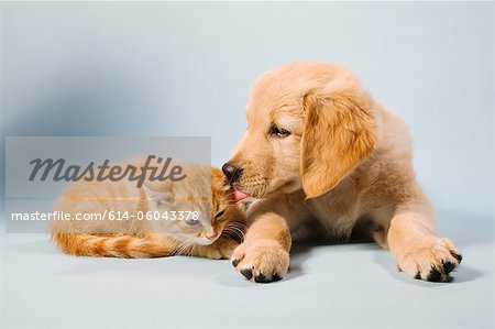 Dog and cat lying down, portrait Stock Photo - Premium Royalty-Free, Image code: 614-06043378