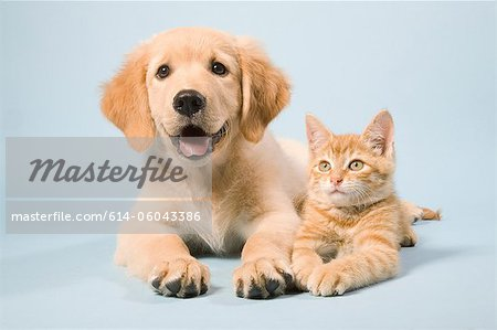 Dog and cat lying down, portrait Stock Photo - Premium Royalty-Free, Image code: 614-06043386