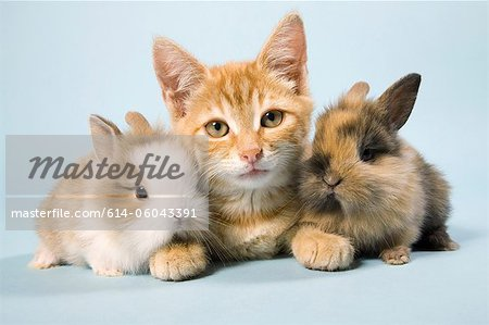 Cat and rabbits Stock Photo - Premium Royalty-Free, Image code: 614-06043391