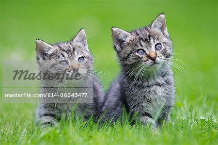 Two kittens on grass Stock Photo - Premium Royalty-Free, Image code: 614-06043477