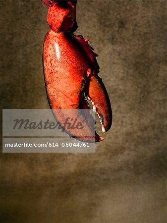 Lobster claw Stock Photo - Premium Royalty-Free, Image code: 614-06044761
