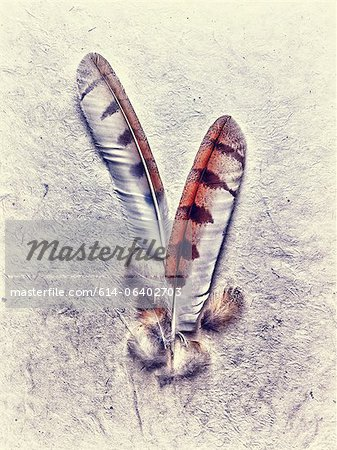 Owl feathers Stock Photo - Premium Royalty-Free, Image code: 614-06402703