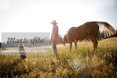 Man in a field with horse and dog Stock Photo - Premium Royalty-Free, Image code: 614-06402852