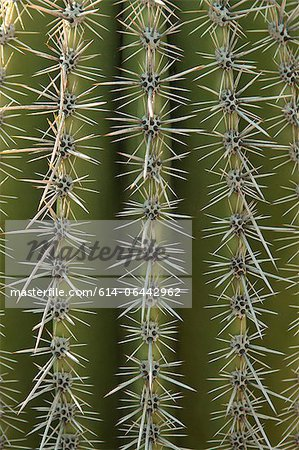 Close up of cactus surface Stock Photo - Premium Royalty-Free, Image code: 614-06442962