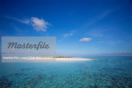 Sandbar in tropical water Stock Photo - Premium Royalty-Free, Image code: 614-06536947