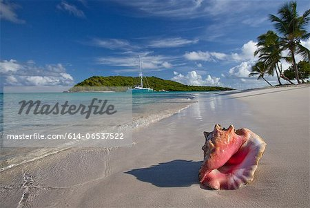 Conch shell on tropical beach Stock Photo - Premium Royalty-Free, Image code: 614-06537522