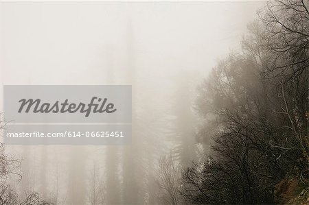 Fog rolling over trees in forest Stock Photo - Premium Royalty-Free, Image code: 614-06625451