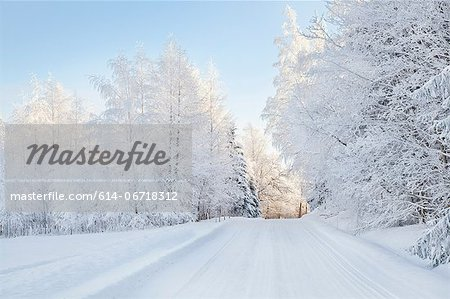 Snow covered trees and rural road Stock Photo - Premium Royalty-Free, Image code: 614-06718312