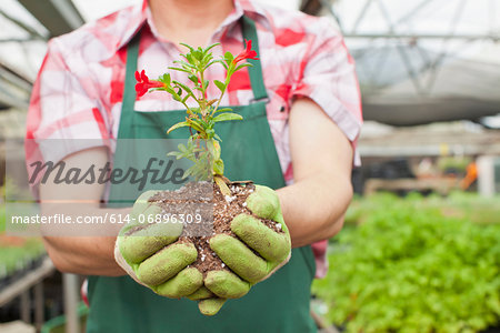 Mature man holding plant in soil in garden centre, close up Stock Photo - Premium Royalty-Free, Image code: 614-06896309