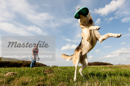 Alsatian dog catching frisbee Stock Photo - Premium Royalty-Free, Image code: 614-06897419
