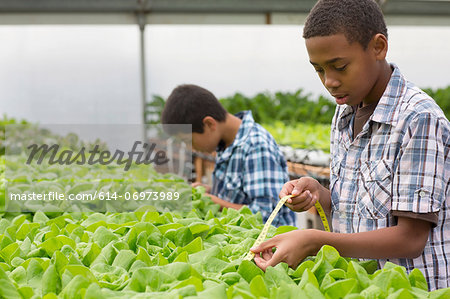 Boy measuring plants in nursery Stock Photo - Premium Royalty-Free, Image code: 614-06973989
