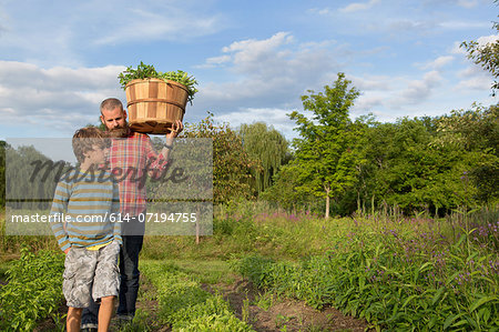 Mature man and son with basket of leaves on herb farm Stock Photo - Premium Royalty-Free, Image code: 614-07194755