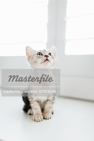 Tabby kitten sitting by door Stock Photo - Premium Royalty-Free, Image code: 614-07708196